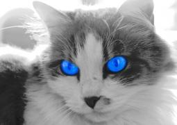 flechette-bleu-copie-3150e727a3a2408070b7f9667df8aa1e4b8f513c