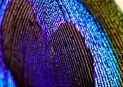 projet52-11-bleu-f4d4c7322c927c5e25e6fc3050668ab8bc9bfbe8