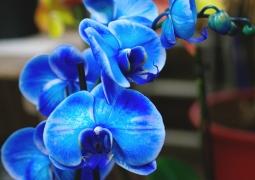 s11-bleu-redim-217b0c59b86309b904f8d7fa95a0416bdfbb40f3