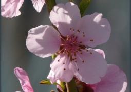 2012-mars1-001-526d7930fb397a9325908e412cb5eb20b96ce2bc