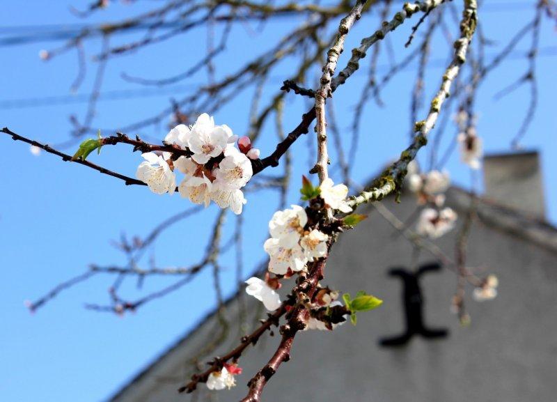 printemps-faff4eed8a97226ba33e751ee20db233953a2e6c