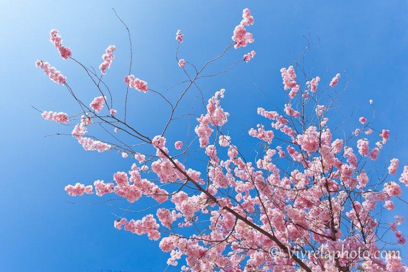 printemps-photo-2e41994c30be8761433c28111aee5530dda2bd24