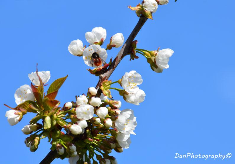 printemps_14-8a35d0ec57bb935a9fbb9584cbf78f3bce2d6a2c
