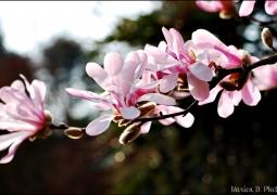 14-printemps-6ffdc332d044d9e2b4d5f1a31410ba80a7d5cb82