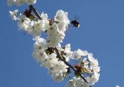 14_printemps-02fe48b5b3d3278486c12ca75742d056e27d2228