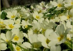 14_printemps-94a8f8bda126d16522a3cfb5ac48082011aaf1a7