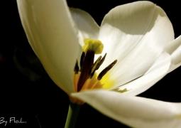 fleur-printemps-2a79d2dae664ae5781d50deb83becf03890125eb
