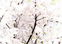 fleurs-bdef-pxl-38cbdd5cb0cf71f47371c1f524109932c8eed026