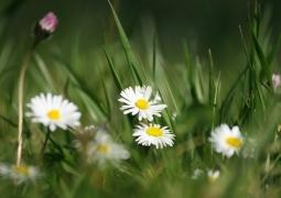 printemps-1-ba9d701ea1580126afb57d5ebb8d884c6fdc5875