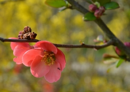 printemps-31f097d87d0e119bd883ef0f26407f54c3e07af3