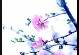printemps-5-d3ad99606f7c0805fa5d58f833ee6b797c3e1c21