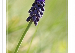 printemps-cecile-f648ff054de65b86674b6dec873b900bbc4561eb