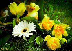 printemps_800x600-bf1a76b3241da4f0444b9fc8b236080635758045