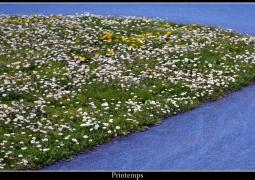 printemps_by_zifnak_small-15759f097d2e5fb26e79793618682e75d28e9c6d