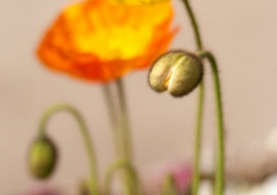 s14-printemps-lulugribouille-aab52c396d7d57c6a2bc80e8b3aeae233ebcb6c8