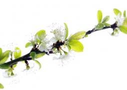 s14-printemps-redim-6d5f9685ee6a09cba6ef517e50f37b5486f28558