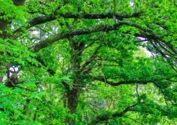 naturel-arbre-vert-307c8a3a3aab1c655425bd85a8d2aca9e212c058