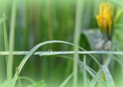 projet-19-52-goutte-de-rosee-en-equilibre-herbe-brin-vert-bokeh-nature-macro-nathalie-dupont-f122bceff3723e55770117240926f9fdbc0f3faf