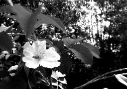22-52-noir-et-blanc-800x600-e234a59a39c13e5a8fa7a4055fa2d21348ef7db5