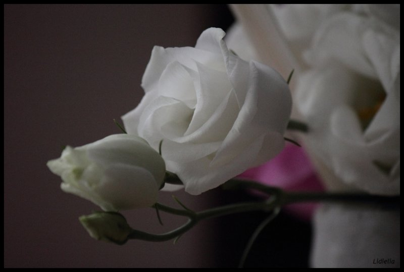 2012-24-beaute-1357c01f1175b32525c629564dc00a1ed718e464