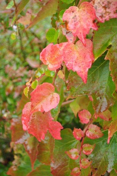 automne-20-10-12-6aa00180238c232725453b06db94b5f58b8bb372