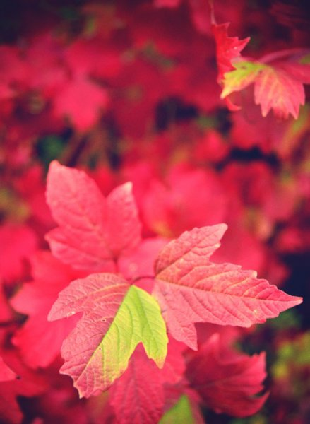 automne2-jpg_effected-410f8fb816695ed97df162cea457deacc70b1b59