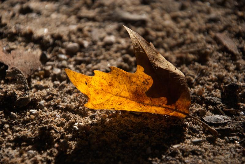 automne_19-b52f6af19f4d4c88c82fb3be3137e4364c8d0454