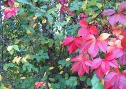 42-52-automne-1-800x600-2b8a38d69d7d6f61dde2ea09bfc4437ad45b2ddf