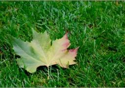 42_automne-cd1a5f4d64f02c88db3e8cd98d2bb034053d10a6