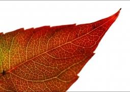 automne-c9b63c7c39eac7c40bee2dbf05f068d7e54e543e