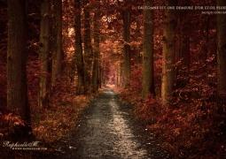 automne-web-a4c35efa19c1a3d119061cced9929995985aba69