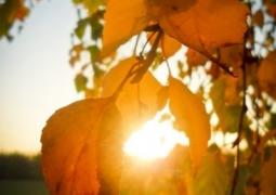 automne_800x600-211e6a215b9dc18a0cbd6522c3d55b7c4b0dd7fa