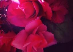 43-rose-ad1b53614ba03dc6f446b7f82c8043001360e41e