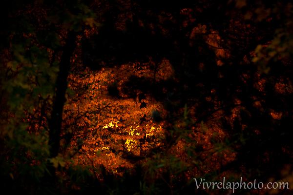photo-nuit-8-56484a1fdd939791a65974e24fc71fea112f17e3