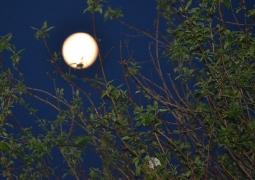 clair-de-lune-au-perigee_0540-c2ccbb684217621633fc62e7997992008716a4fb