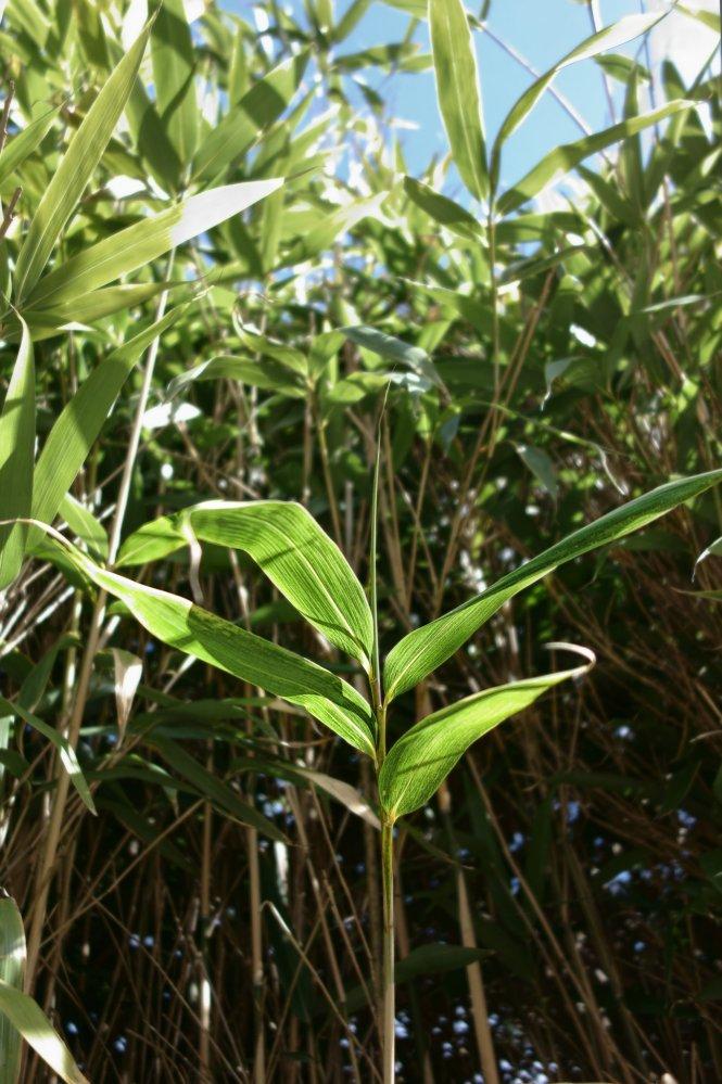 bambou-2-29fae7ad96a8ca218cdf5e1e3b06f9022b495eb0