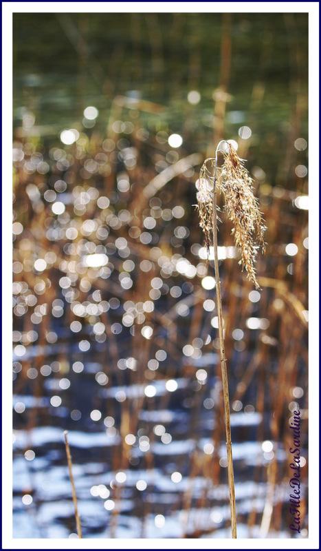 reflets-de-soleil-5-ad8a5a478312254c7a497bc85e0ba751eff8de8e