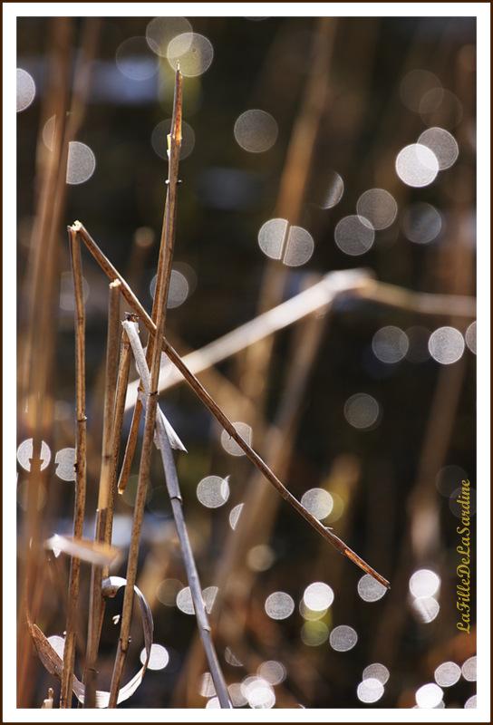 reflets-de-soleil-6-158456b4de9213a6a6d525fe628a69bae357cf52