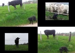 collage_2013-04-26_15-39-25-ef3cc5ac91e0f5bdfbc93dc48f43ca98560d1036