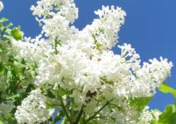bleu-blanc-715a8f307ea980007da5edfdc67d46b3b02f50c5