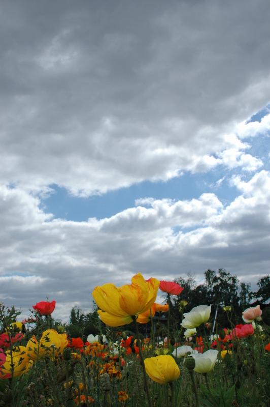6470_fleurs_eclaircies-8212a8bf431513b97ab83aee58e998efc20414f5