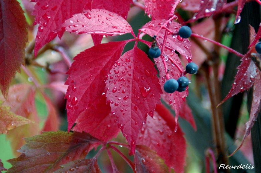 feuilles-et-fruits-29154e8be14ffe9d5e3adea8353f06097054c035