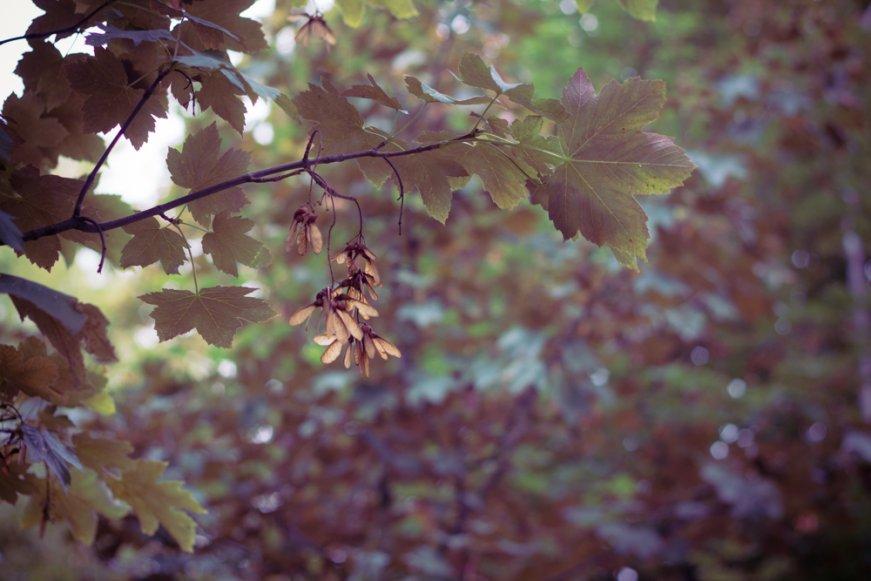 42_automne_2-d7b25dea5a3faf63c3e364a1ca11ba5003105ab3