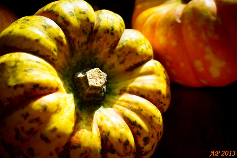 automne_800x600-ef0a9e4ba94950616c02a59ae2db8da86b5cac8a