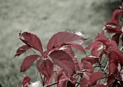 42-52-automne-89aa0b8b0719220b293fba74d4d5da8a0e502ef9