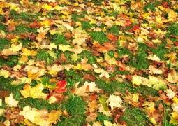42-automne-57f9305b53545c297f45857088c8a6a56b8b3229