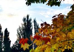 42-automne-da0bdc146575f6a32007b3aa850b413b1a1f595b