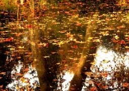 4252-automne-406c1dba63154fb0ddd96132476443a0d6e9d4ff