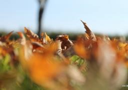 42_automne-0f7530afa4992b1a3c4cedf29f9ff67b628c003f