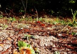 automne-2-red-658c00ef8df16739cd4fb56ad1f98494f486d6b3